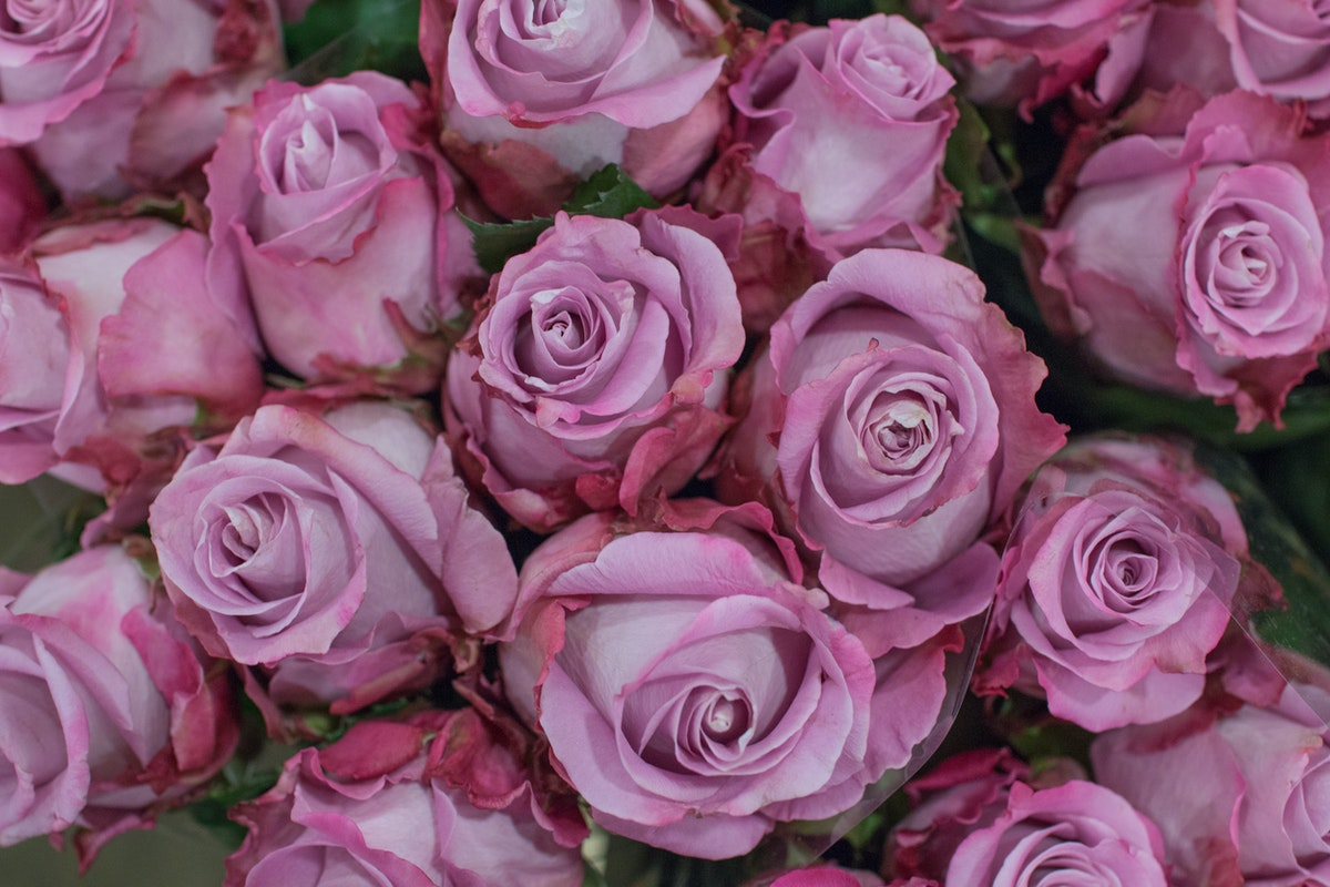 New Covent Garden Flower Market September 2016 Market Report Flowerona Hr A 58