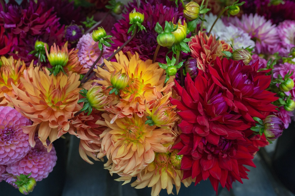 New Covent Garden Flower Market September 2017 Flower Market Report Rona Wheeldon Flowerona British Dahlias At J H Hart Flowers 8