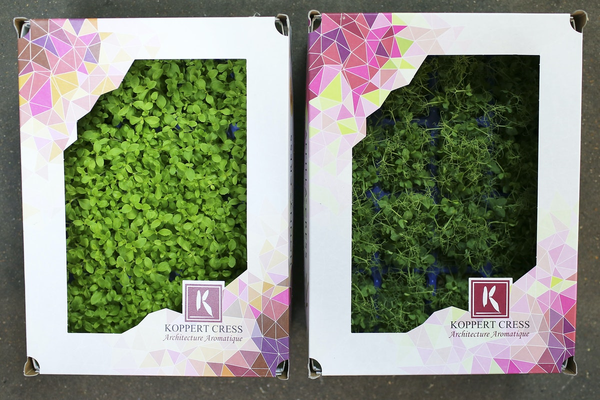 Fruit And Veg Market Report April 2017 Koppertcress New Packaging