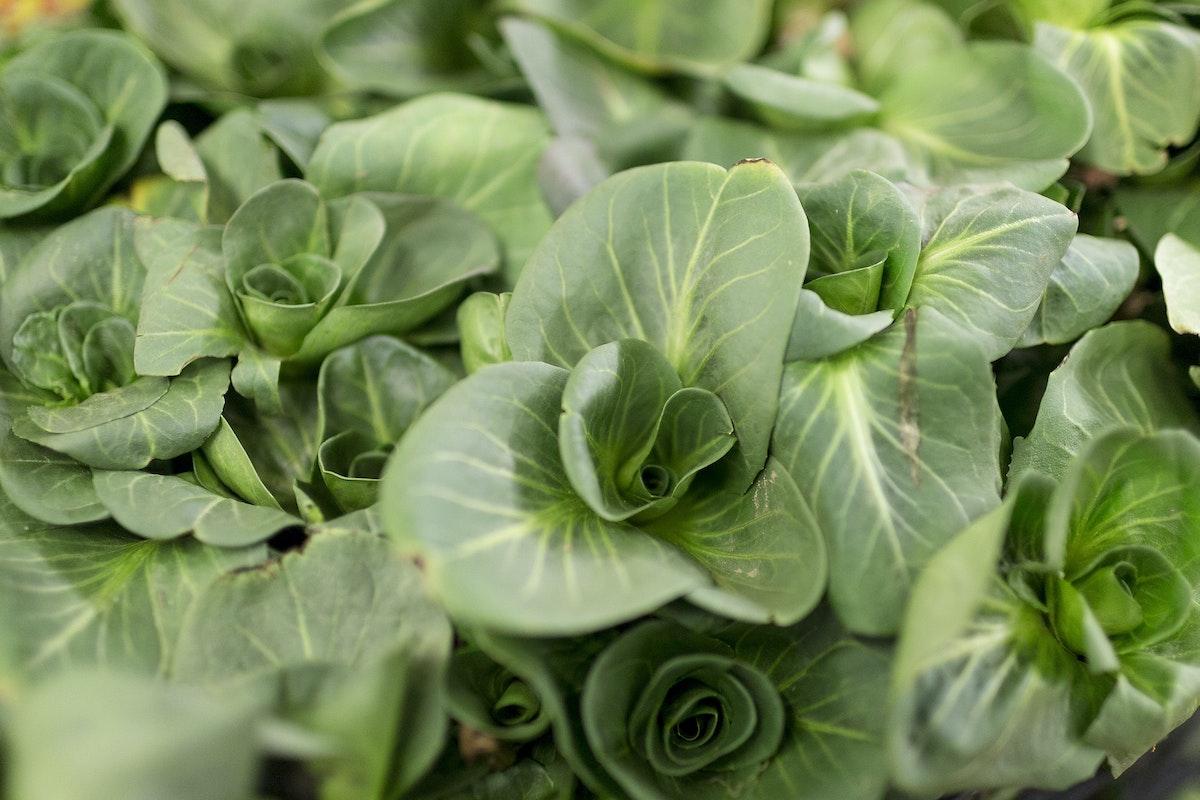 Fruit And Veg Market Report February 2017 Chicory