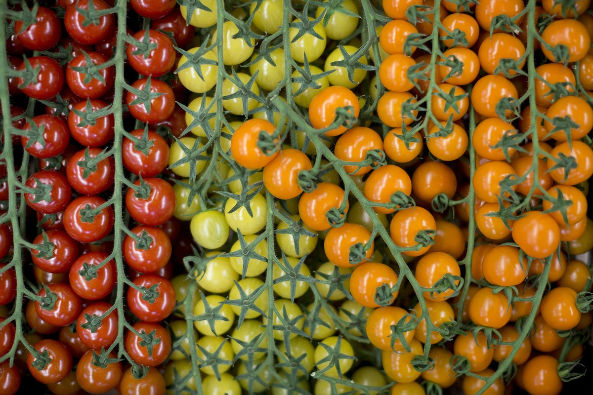 Fruit And Veg Market Report February 2017 Tomatoes
