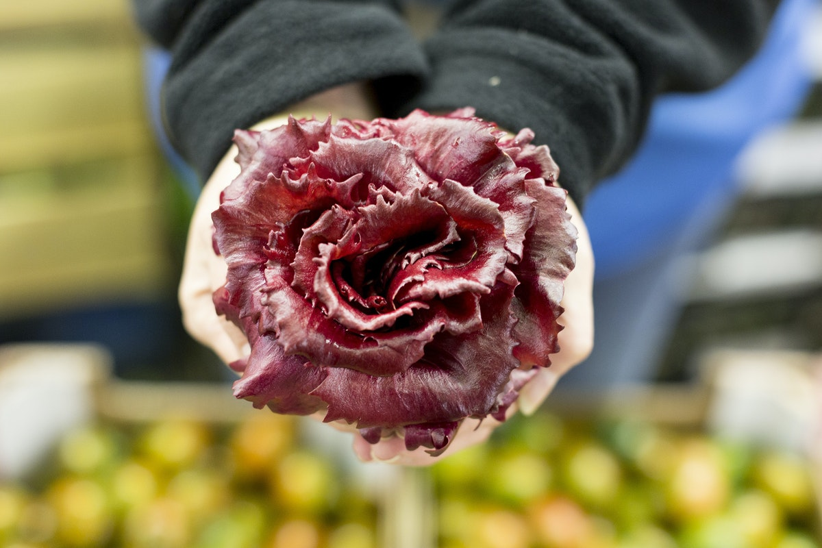 Fruit And Veg Market Report March 2017 Rosa Di Friuli Radicchio