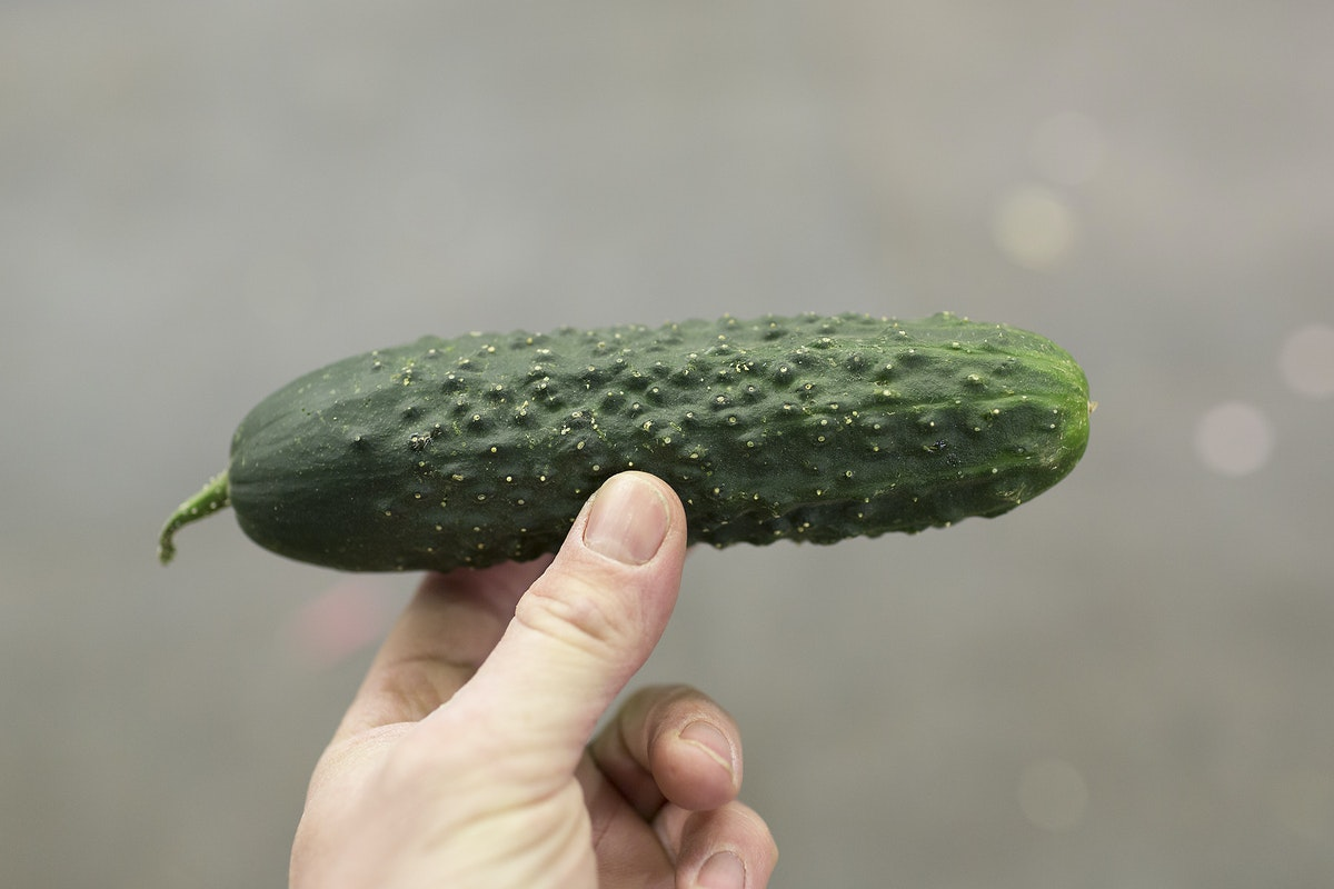 Fruit And Veg Market Report May 2017 Cucumber