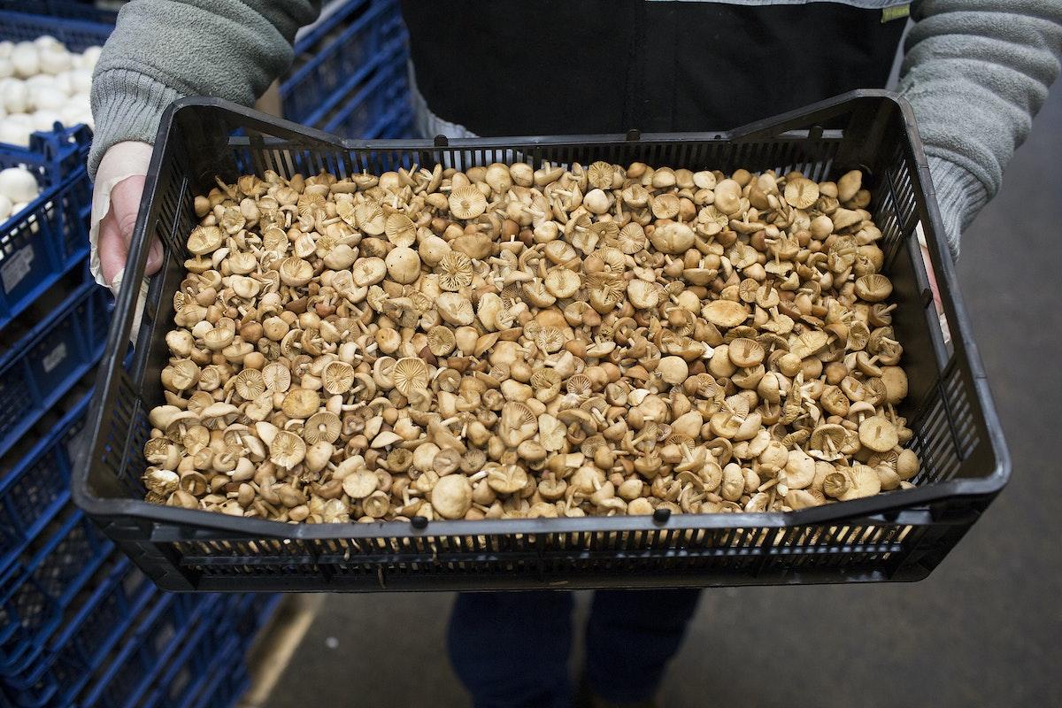 Fruit And Veg Market Report May 2017 Mousseron