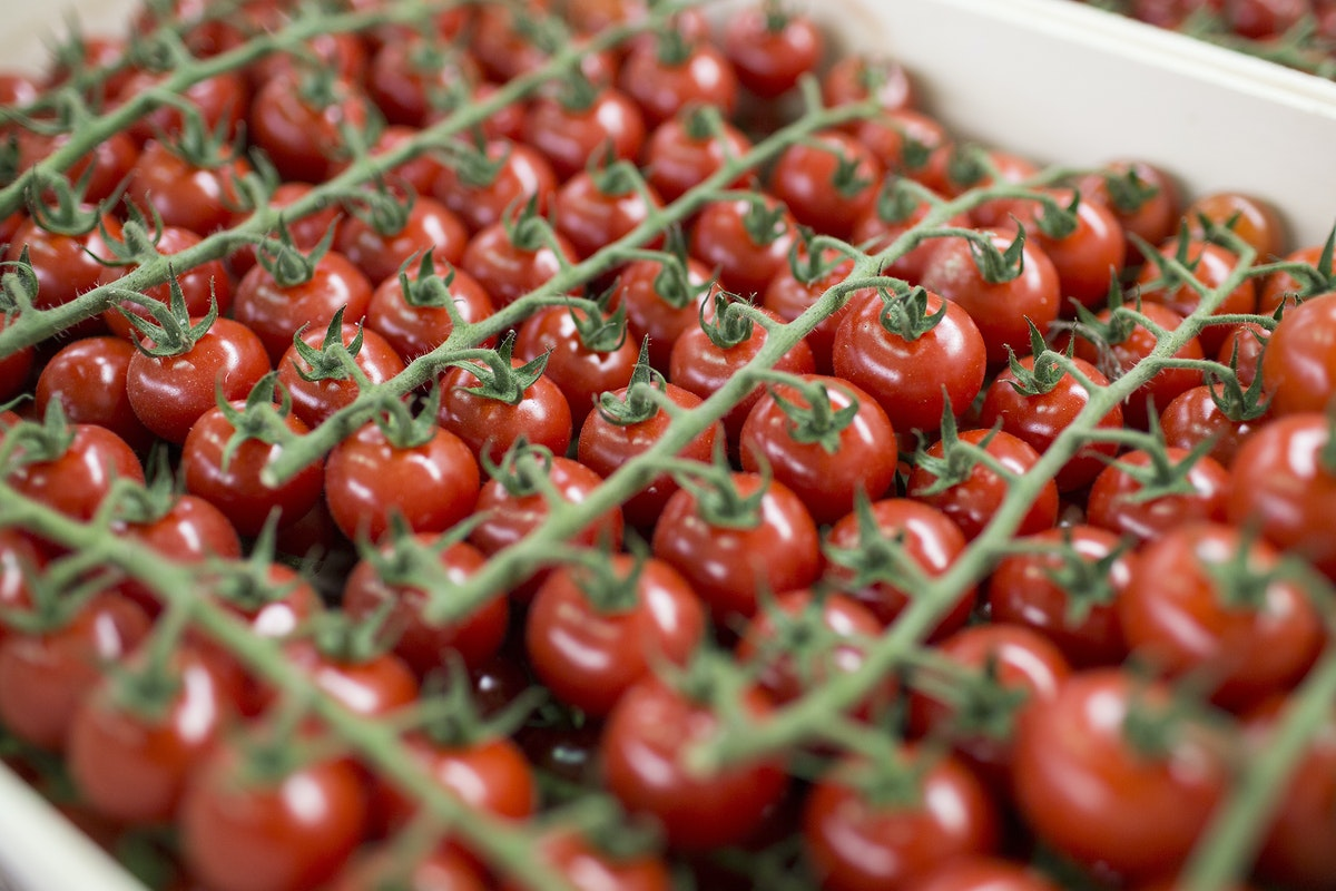 Fruit And Veg Market Report May 2017 Tomatoes