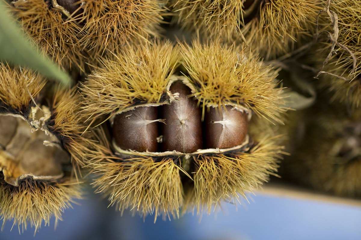 Fruit And Veg Market Report October 2016 Chestnuts
