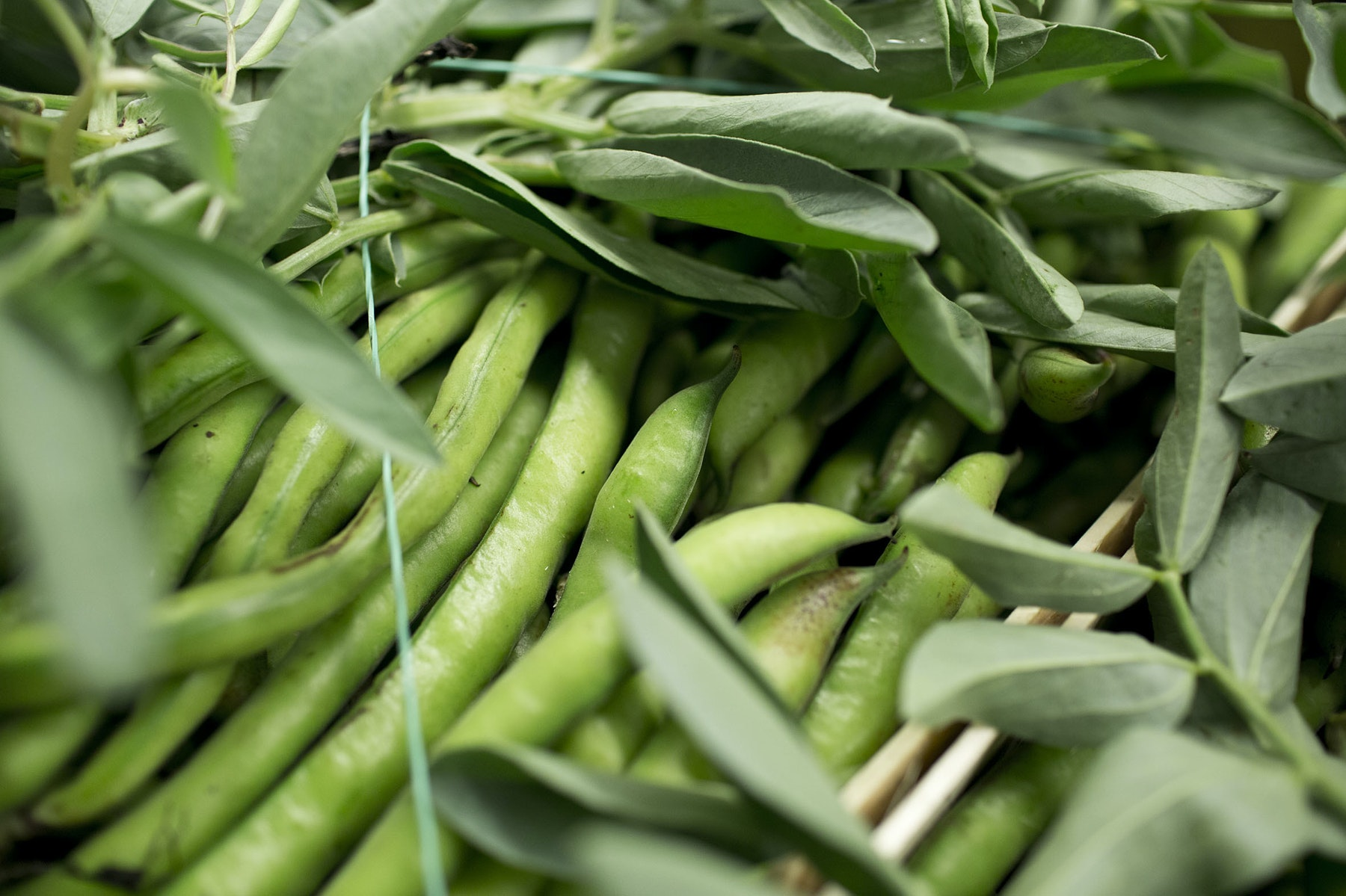 Fruit And Vegetable Market Report April 2014 Broad Beans