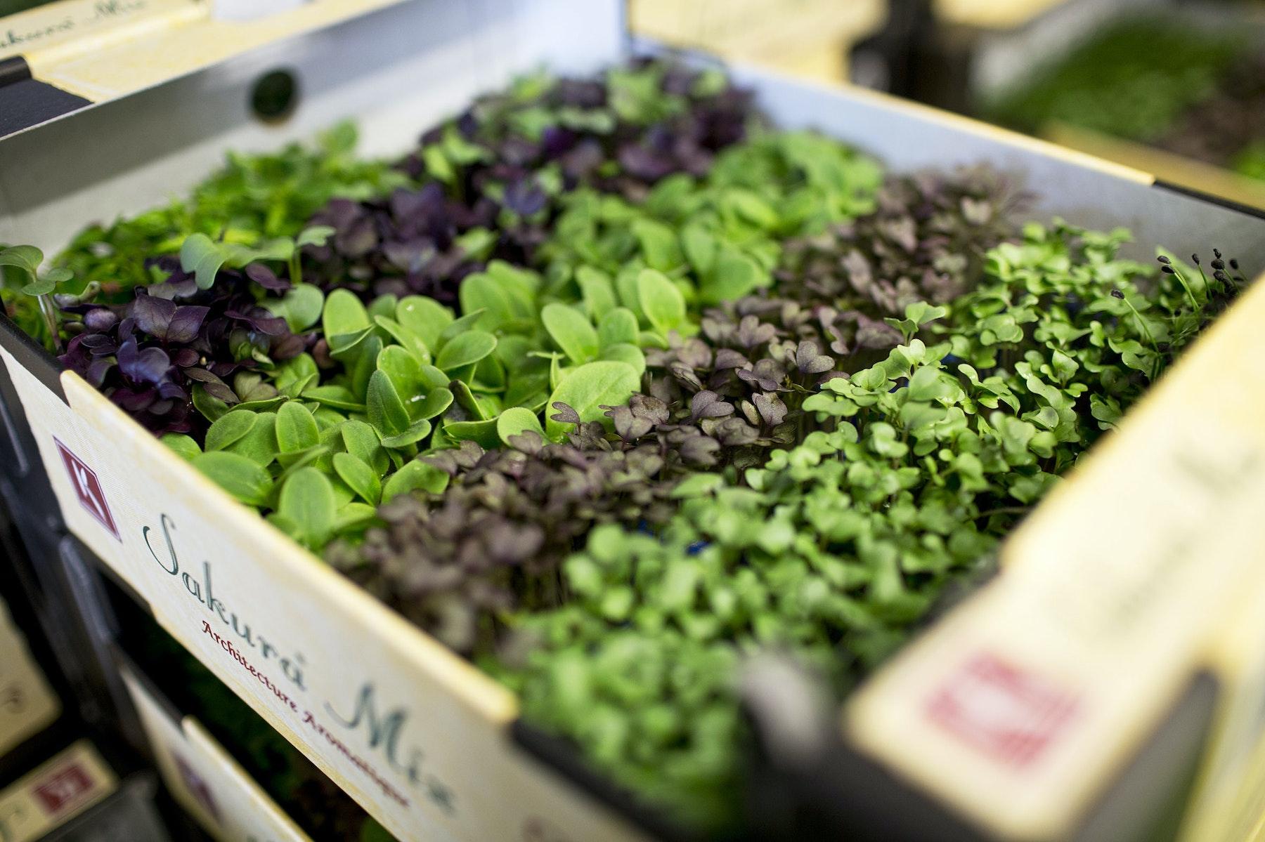 Fruit And Vegetable Market Report April 2014 Sakurai Mix