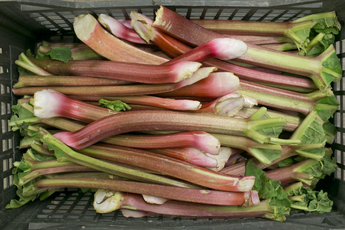 Fruit And Vegetable Market Report April 2015 Outdoor Rhubarb