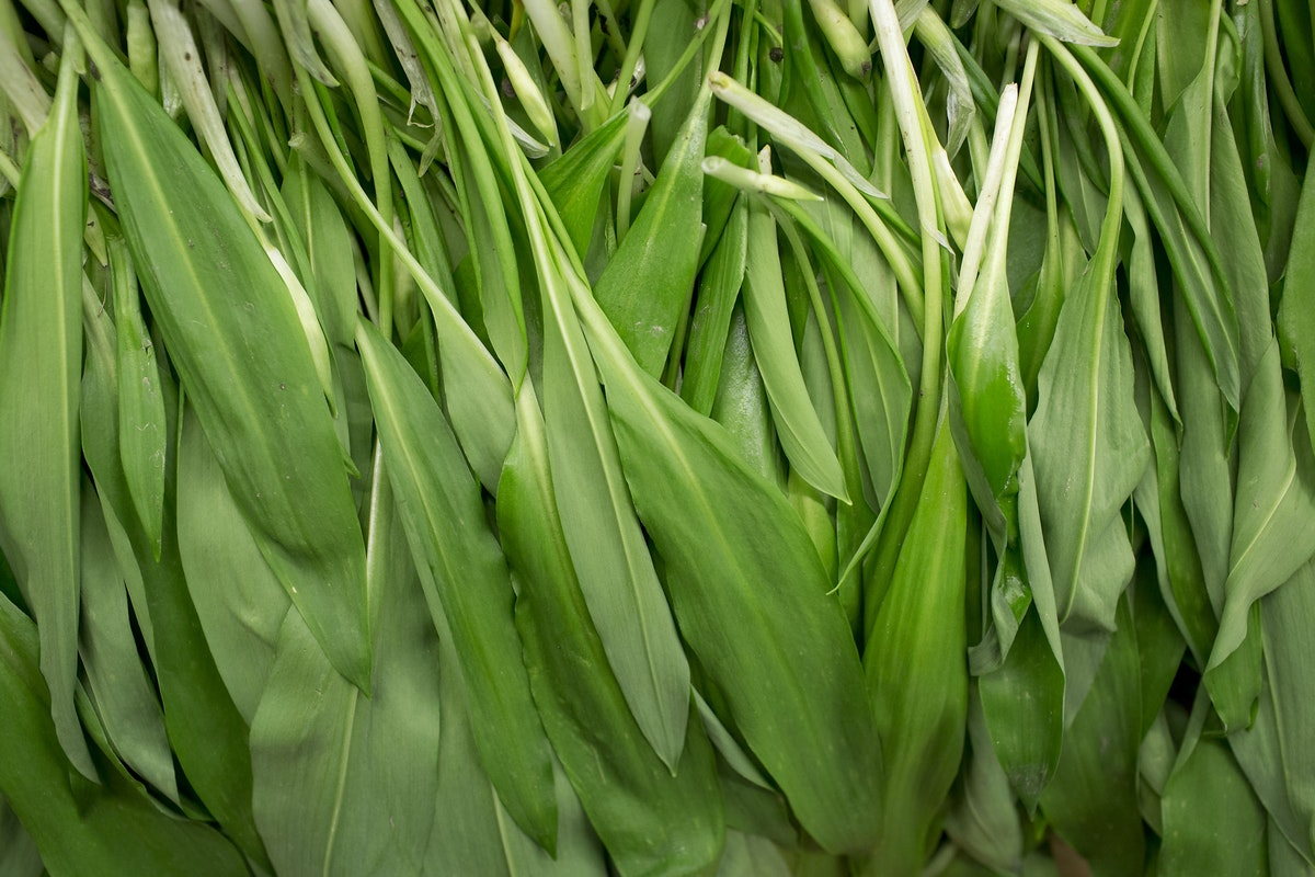 Fruit And Vegetable Market Report April 2016 Wild Garlic