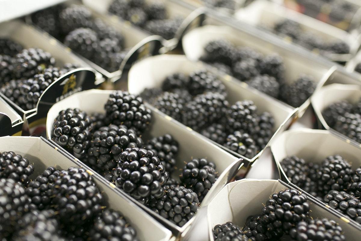 Fruit And Vegetable Market Report August 2015 Blackberries