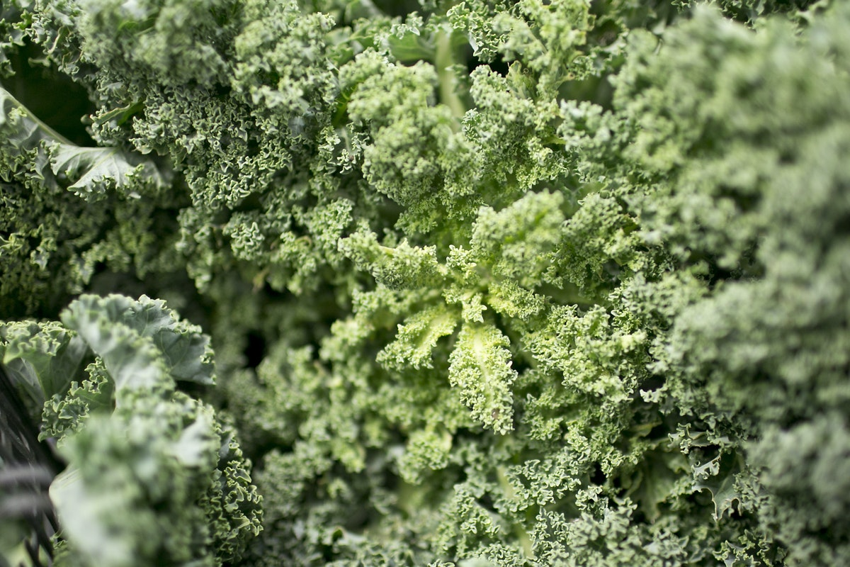 Fruit And Vegetable Market Report August 2015 Curly Kale