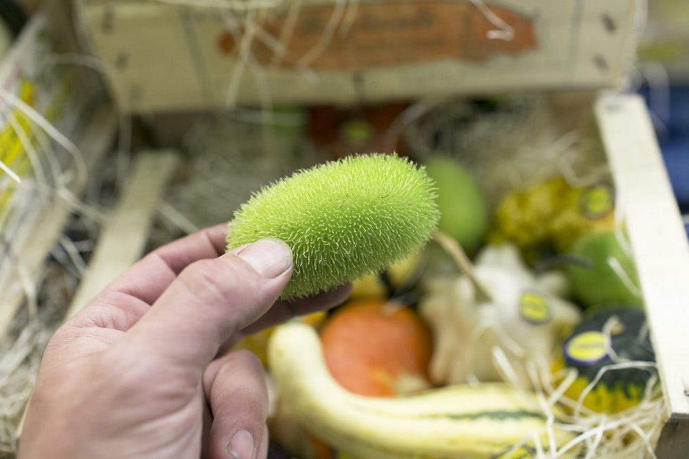 August's Fruit and Veg Market Report