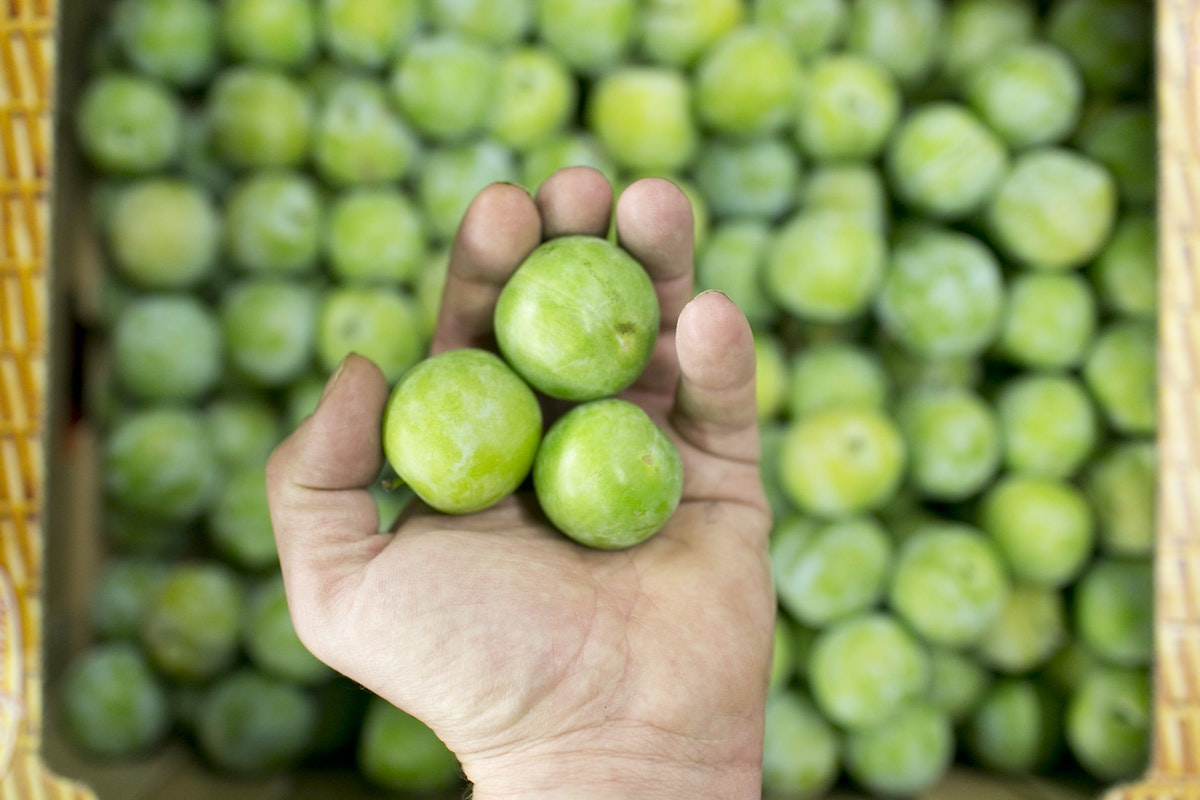 Fruit And Vegetable Market Report August 2015 Greengage