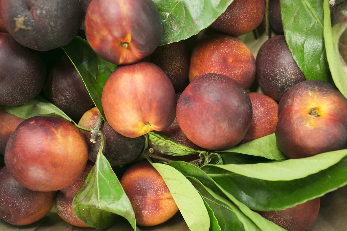 Fruit And Vegetable Market Report August 2015 Nectarines