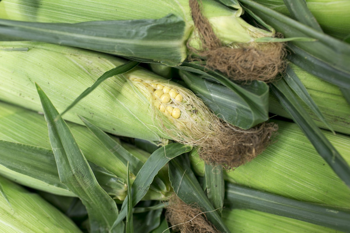Fruit And Vegetable Market Report August 2015 Sweetcorn