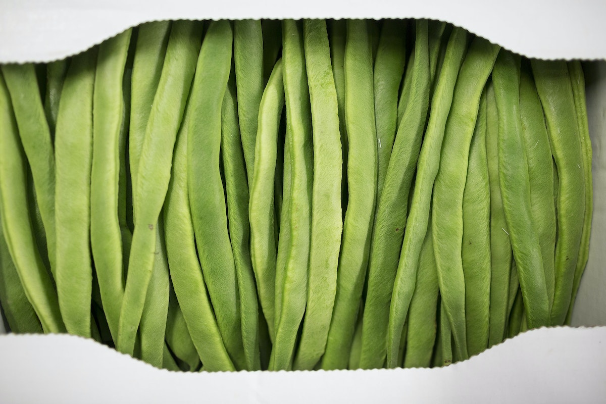 Fruit And Vegetable Market Report August 2016 Runner Beans