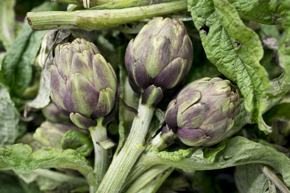 Fruit And Vegetable Market Report December 2014 Artichokes
