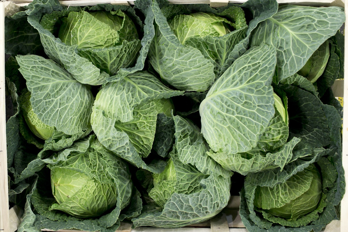 Fruit And Vegetable Market Report December 2014 Cabbage