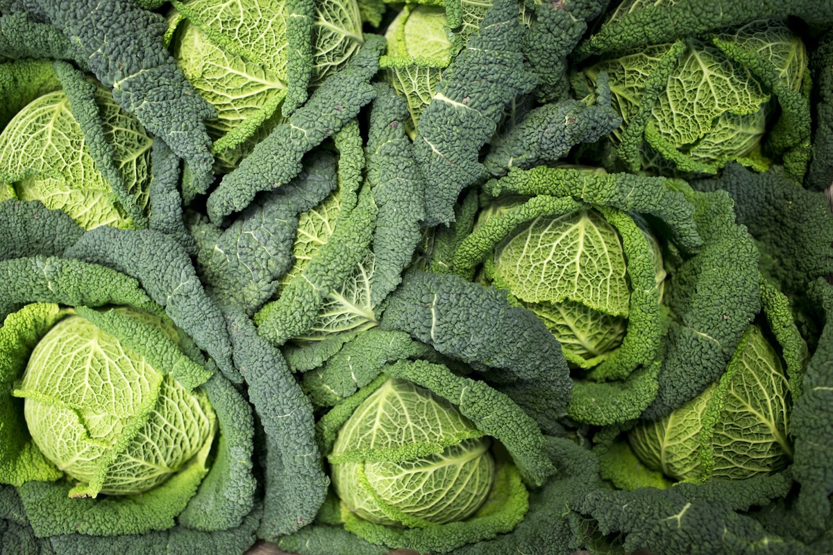 Fruit And Vegetable Market Report February 2016 Savoy Cabbage