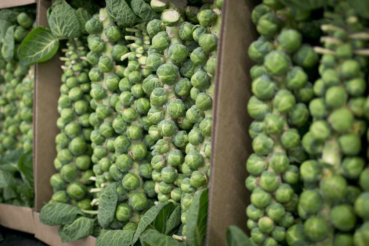 Fruit And Vegetable Market Report January 2015 Brussel Sprouts