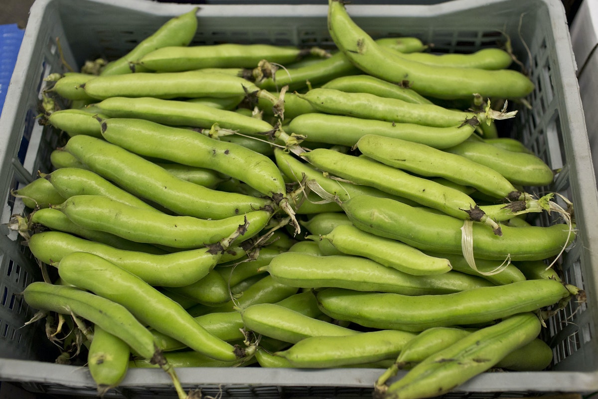 Fruit And Vegetable Market Report July 2014 Broad Beans