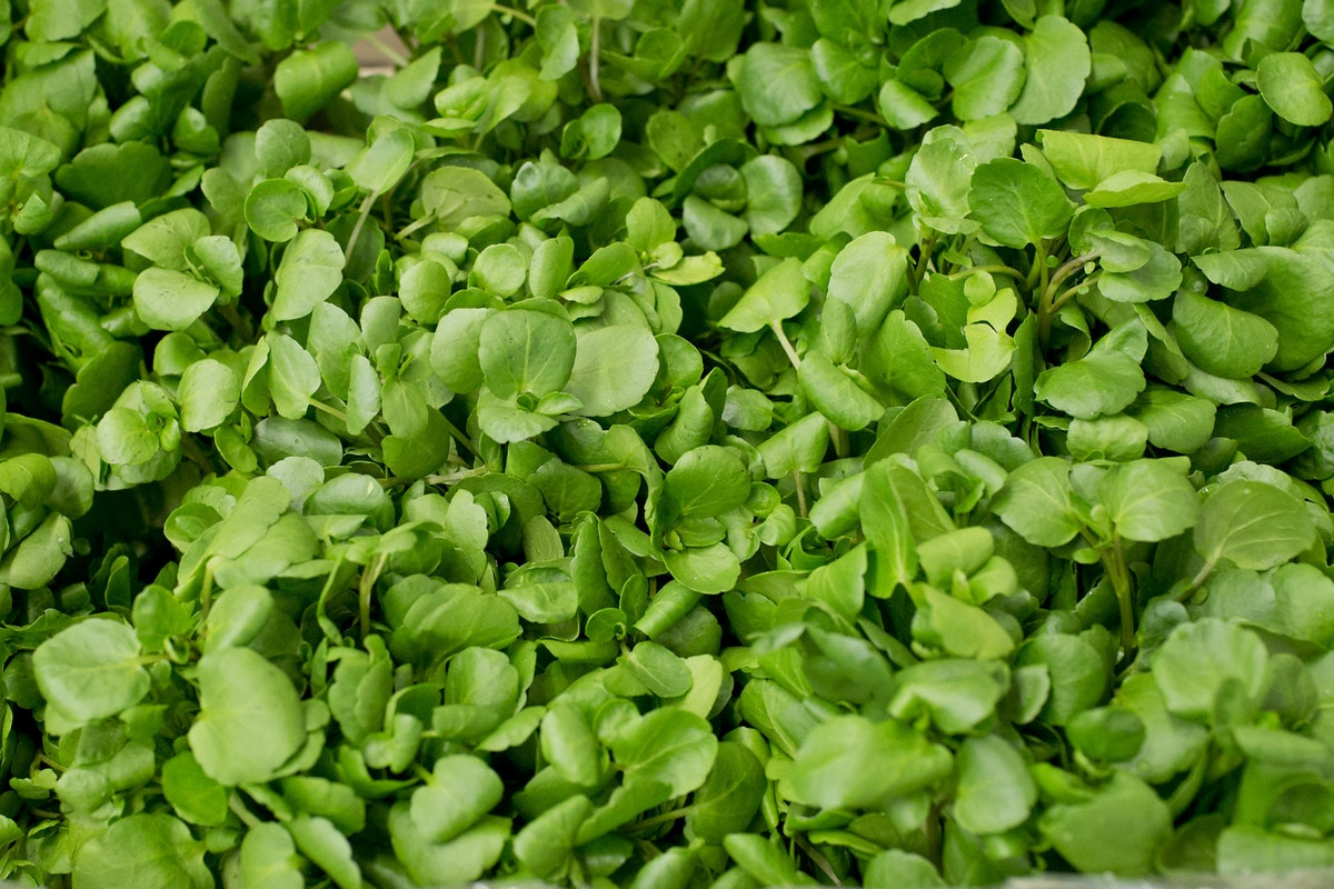 Fruit And Vegetable Market Report July 2014 Watercress