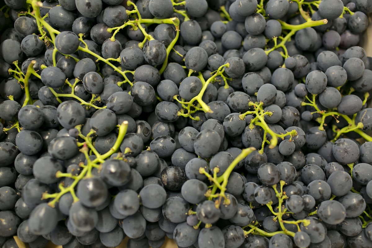 Fruit And Vegetable Market Report July 2015 Grapes