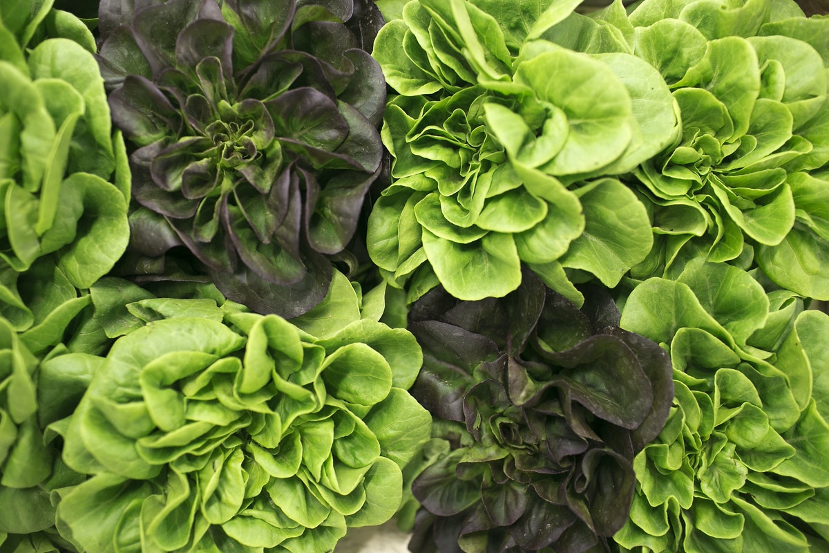 Fruit And Vegetable Market Report July 2015 Lettuce