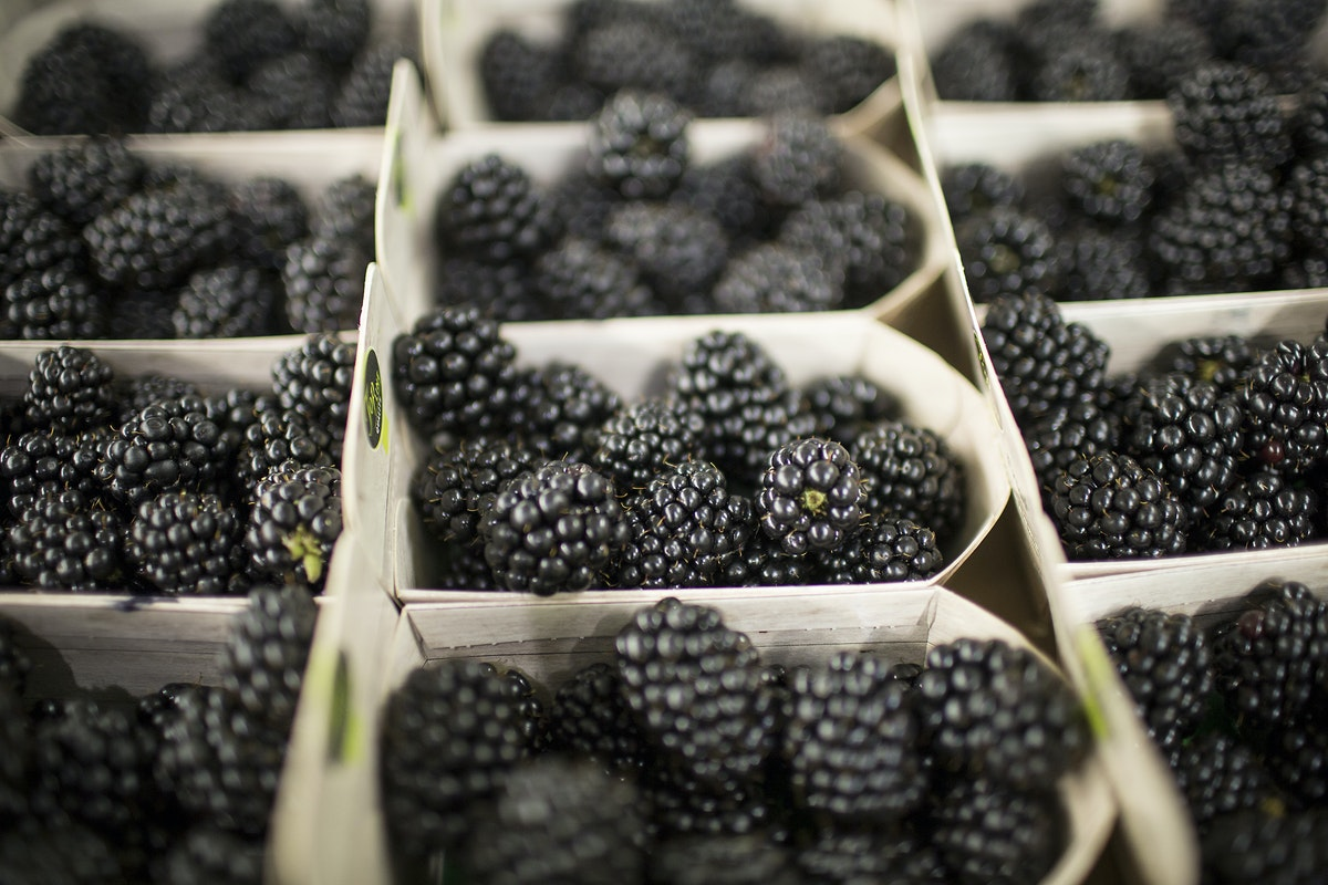 Fruit And Vegetable Market Report July 2016 Blackberries