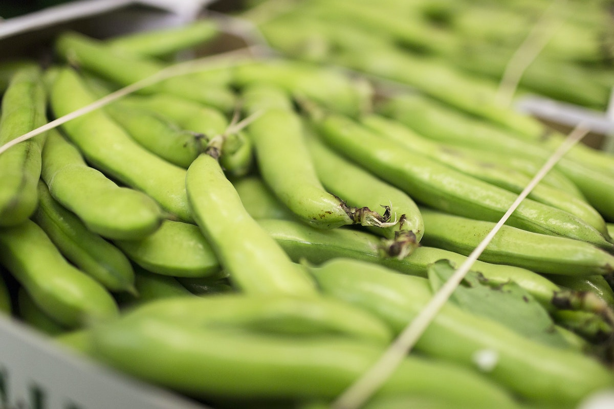 Fruit And Vegetable Market Report July 2016 Broad Beans
