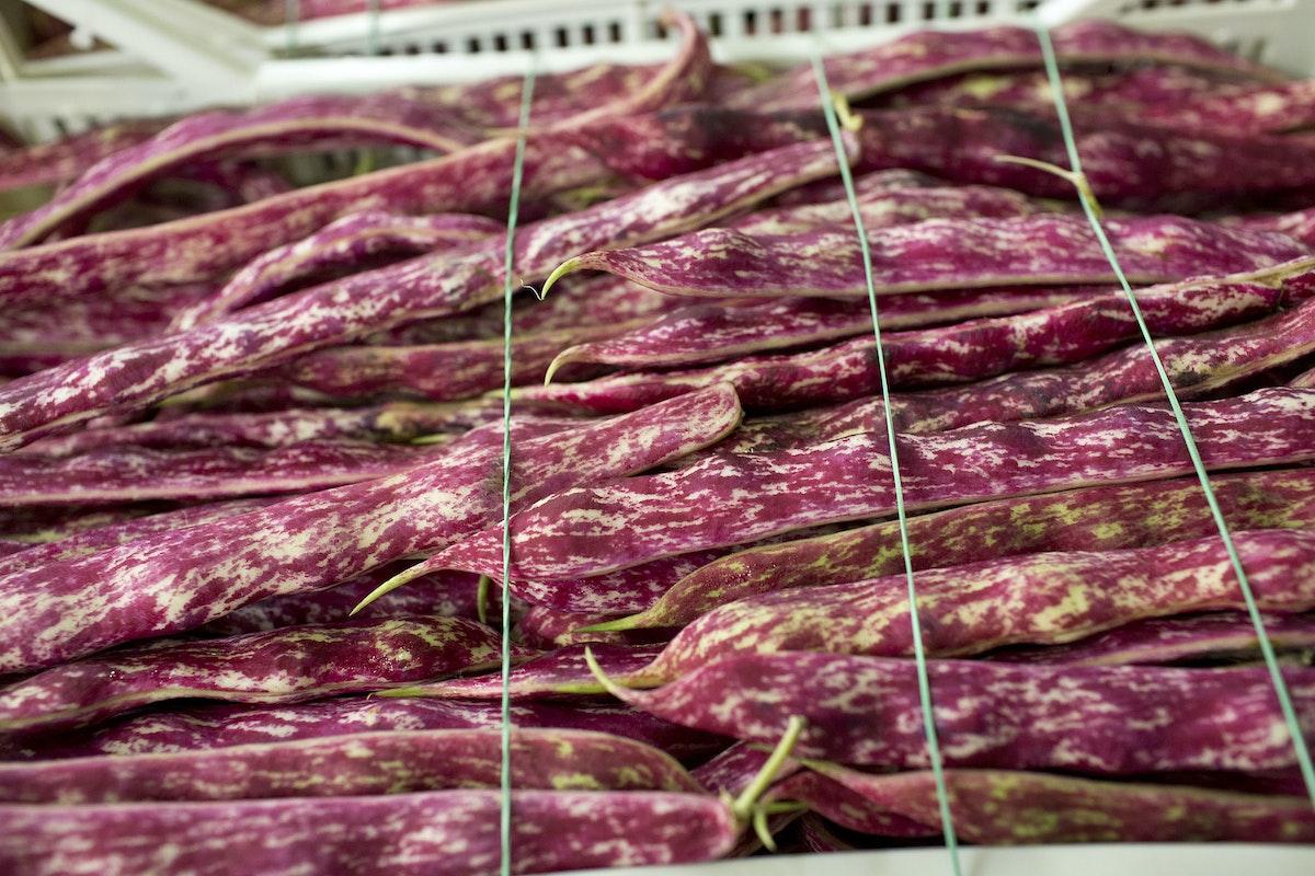 Fruit And Vegetable Market Report June 2014 Borlotti