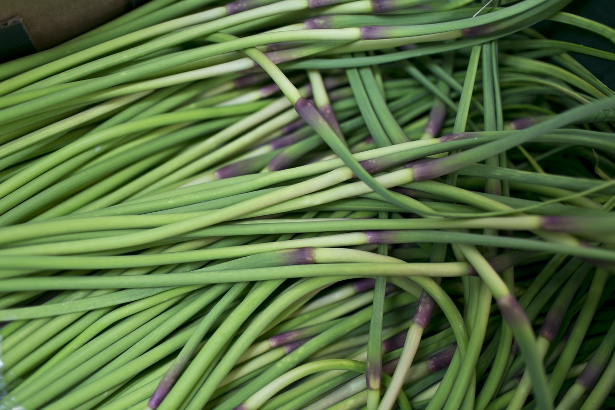 Fruit And Vegetable Market Report June 2015 Garlic Scapes