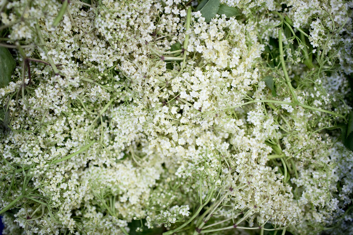 Fruit And Vegetable Market Report June 2016 Elderflower