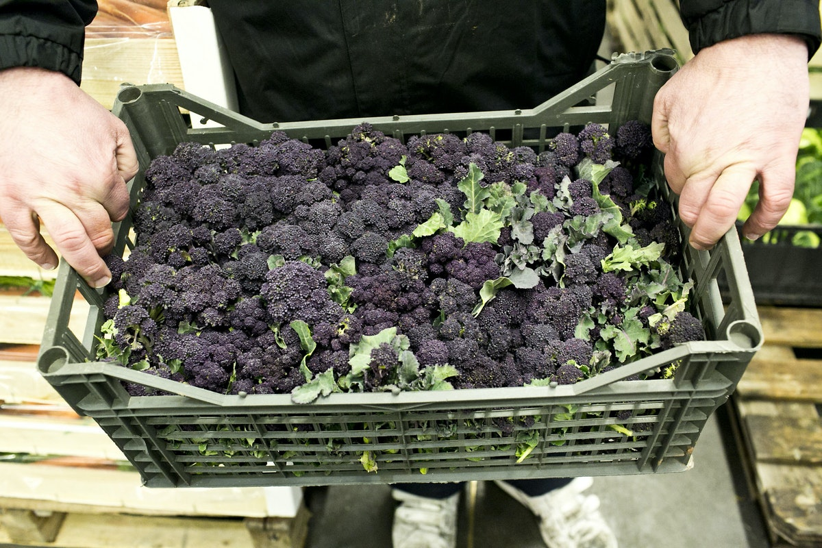 Fruit And Vegetable Market Report March 2015 Purple Sprouting