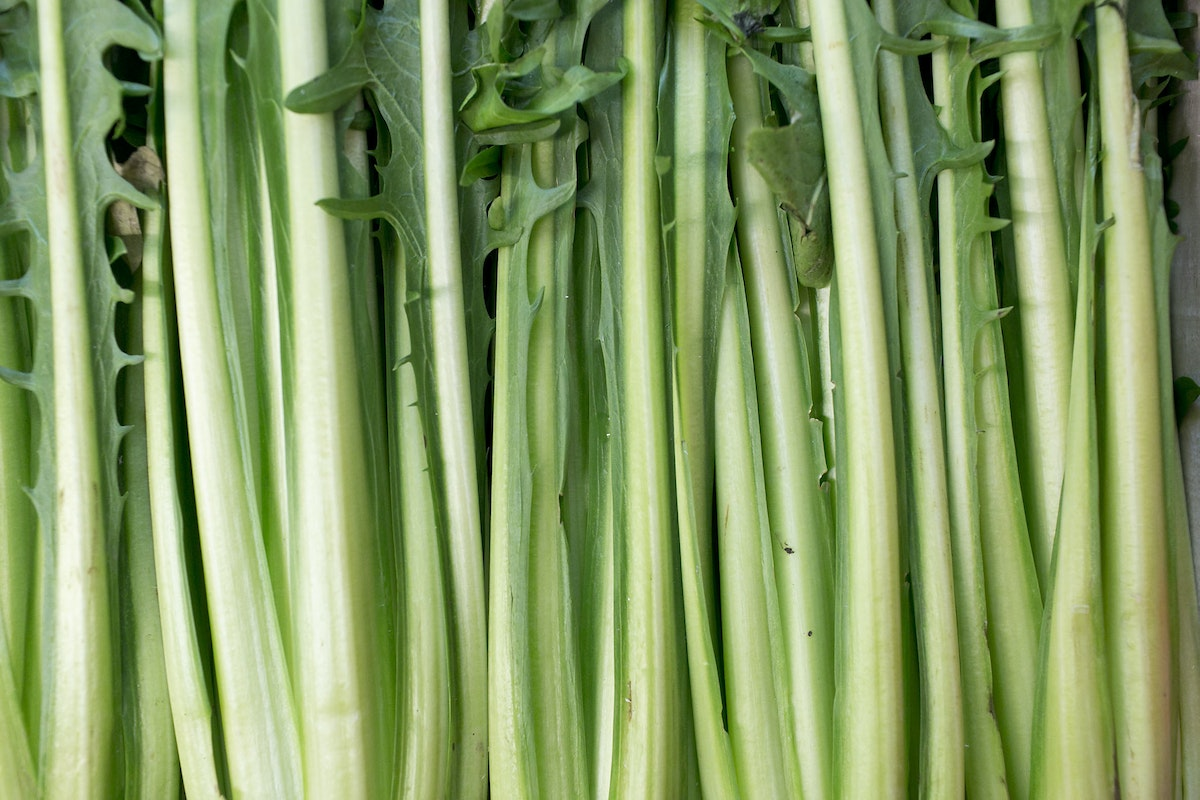 Fruit And Vegetable Market Report November 2015 Puntarelle