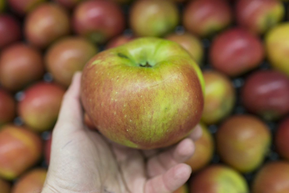 Fruit And Vegetable Market Report November 2016 Bramley Apples