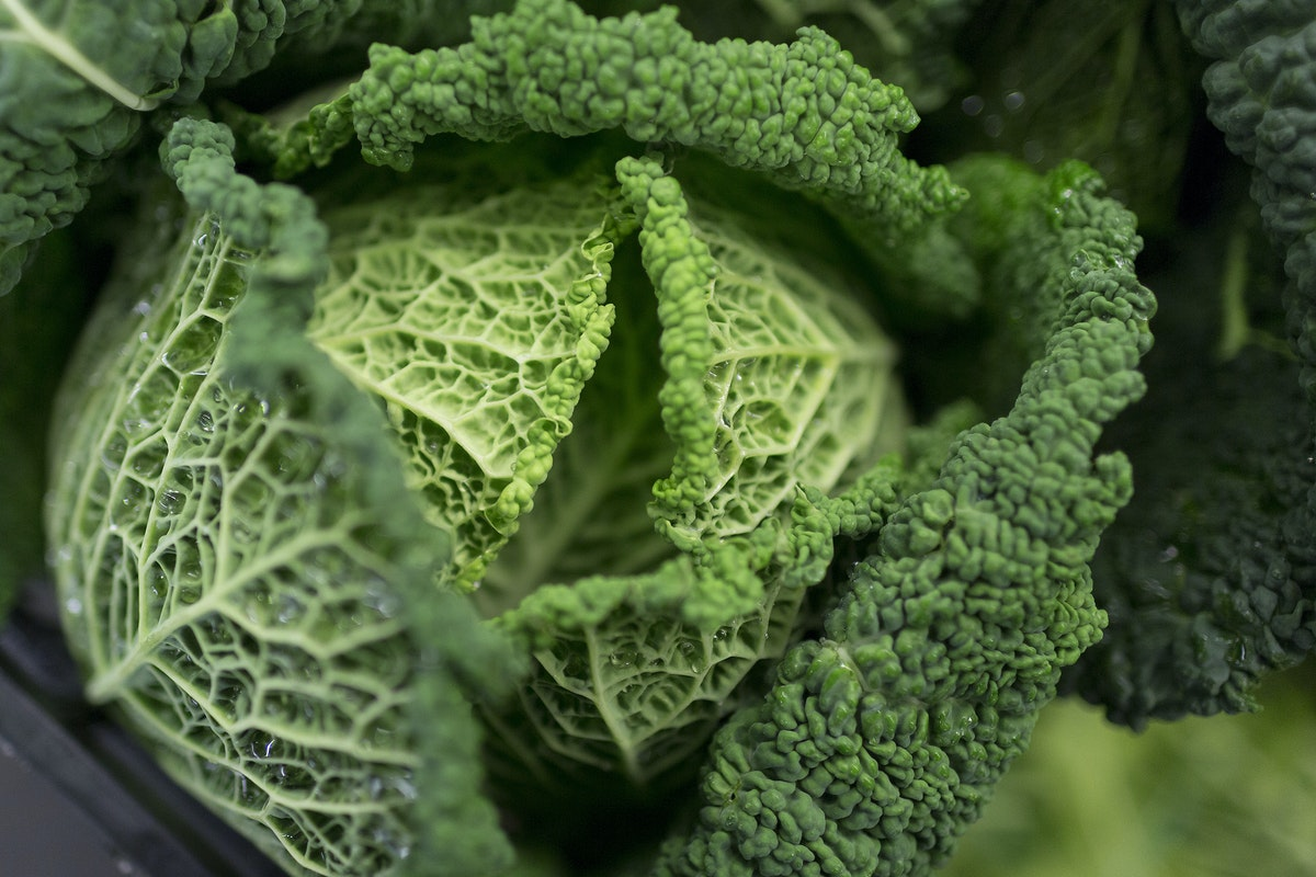 Fruit And Vegetable Market Report November 2016 Savoy Cabbage