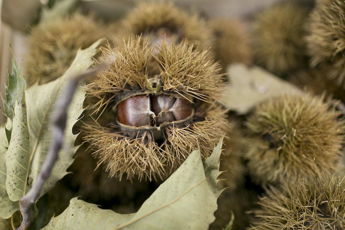 Fruit And Vegetable Market Report October 2014 Chestnuts