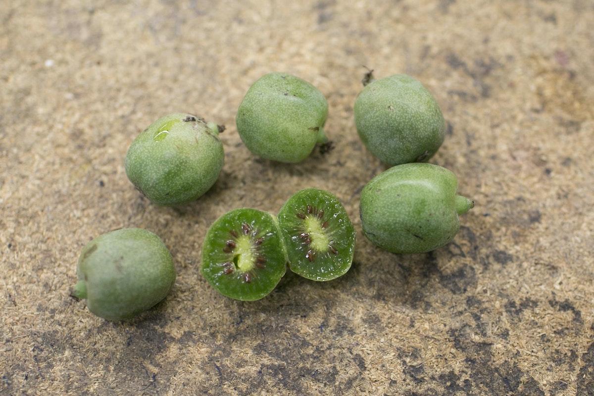 Fruit And Vegetable Market Report October 2014 Kiwi Berries
