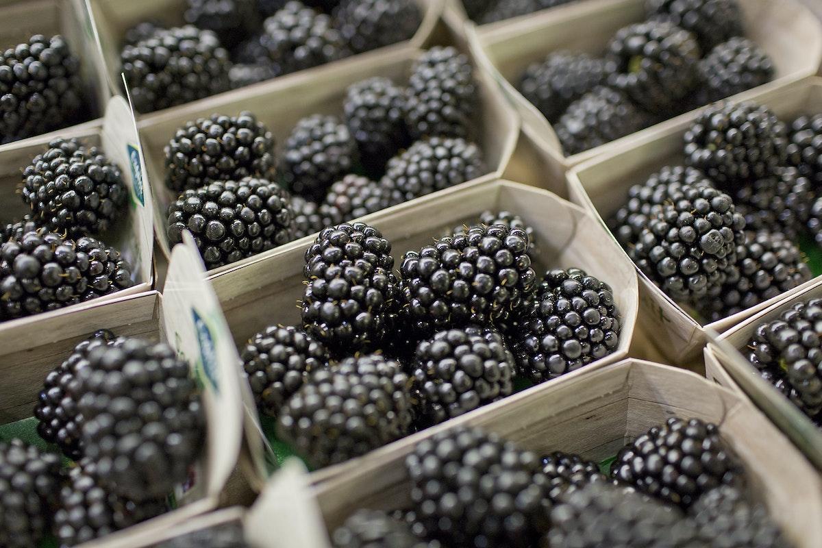 Fruit And Vegetable Market Report September 2015 Blackberries