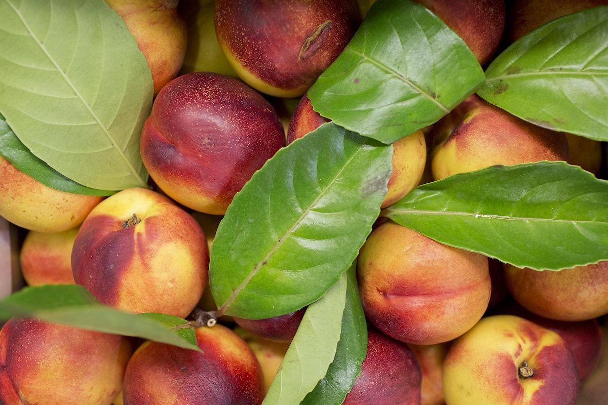 Fruit And Vegetable Market Report September 2015 Nectarines