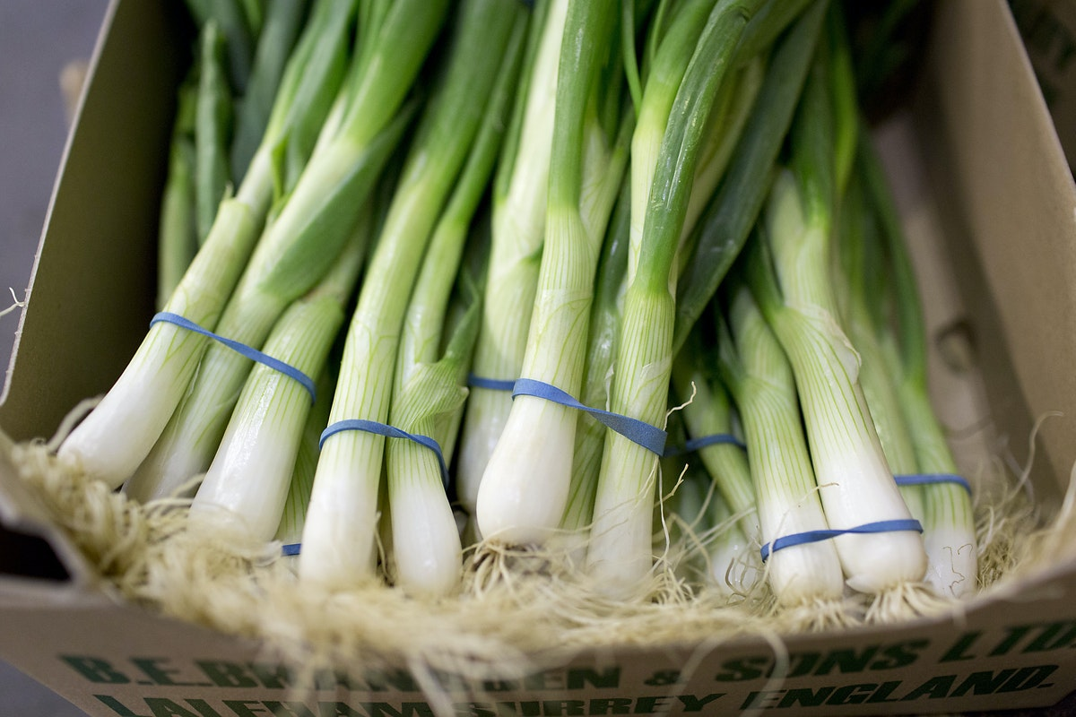 Fruit And Vegetable Market Report September 2015 Spring Onions
