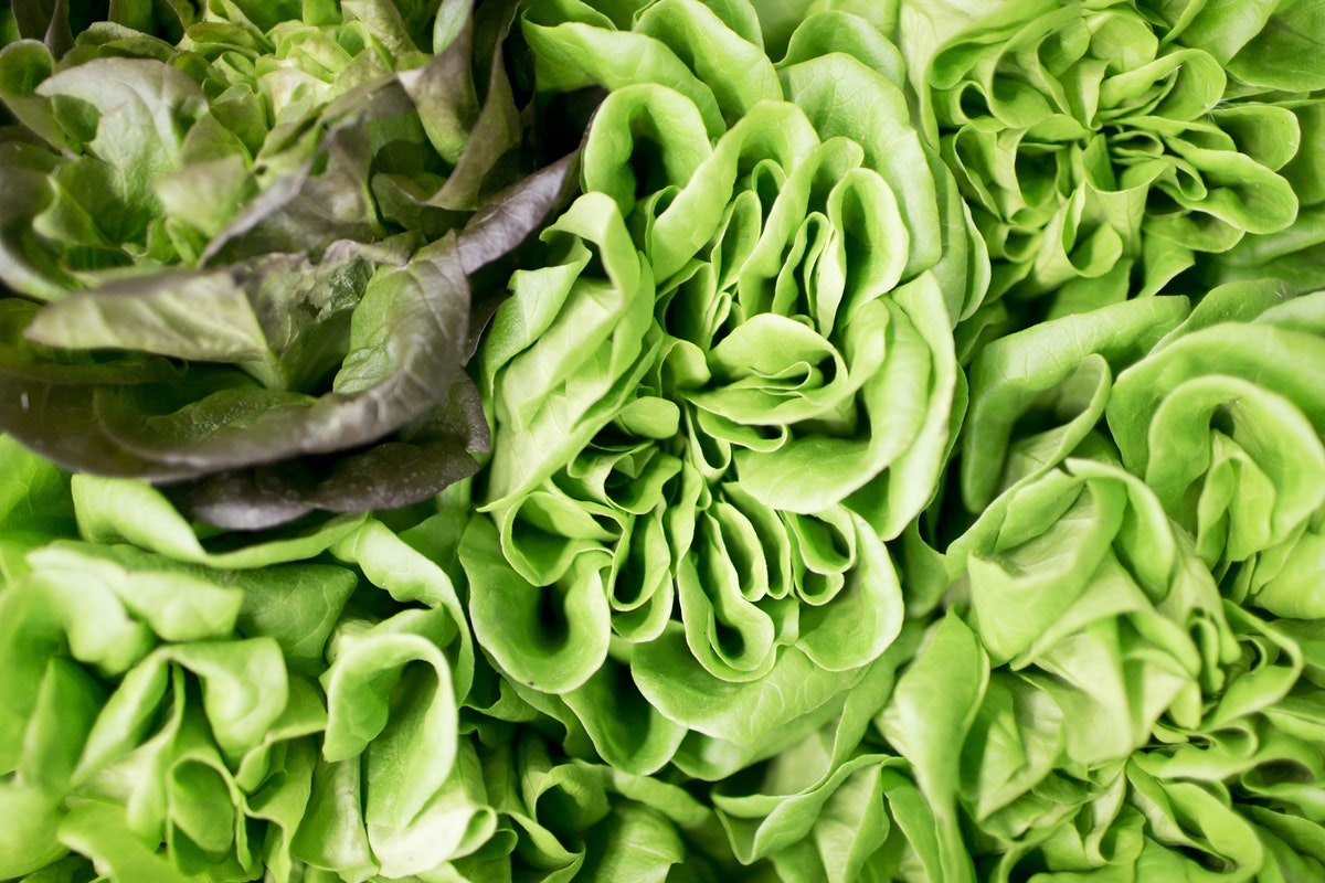 Fruit And Vegetables Market Report December 2015 Lettuce