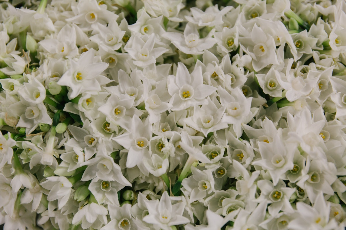 New Covent Garden Flower Market A Florists Guide To Christmas At The Flower Market Rona Wheeldon Flowerona British Paper White Narcissi At Pratley November 2017