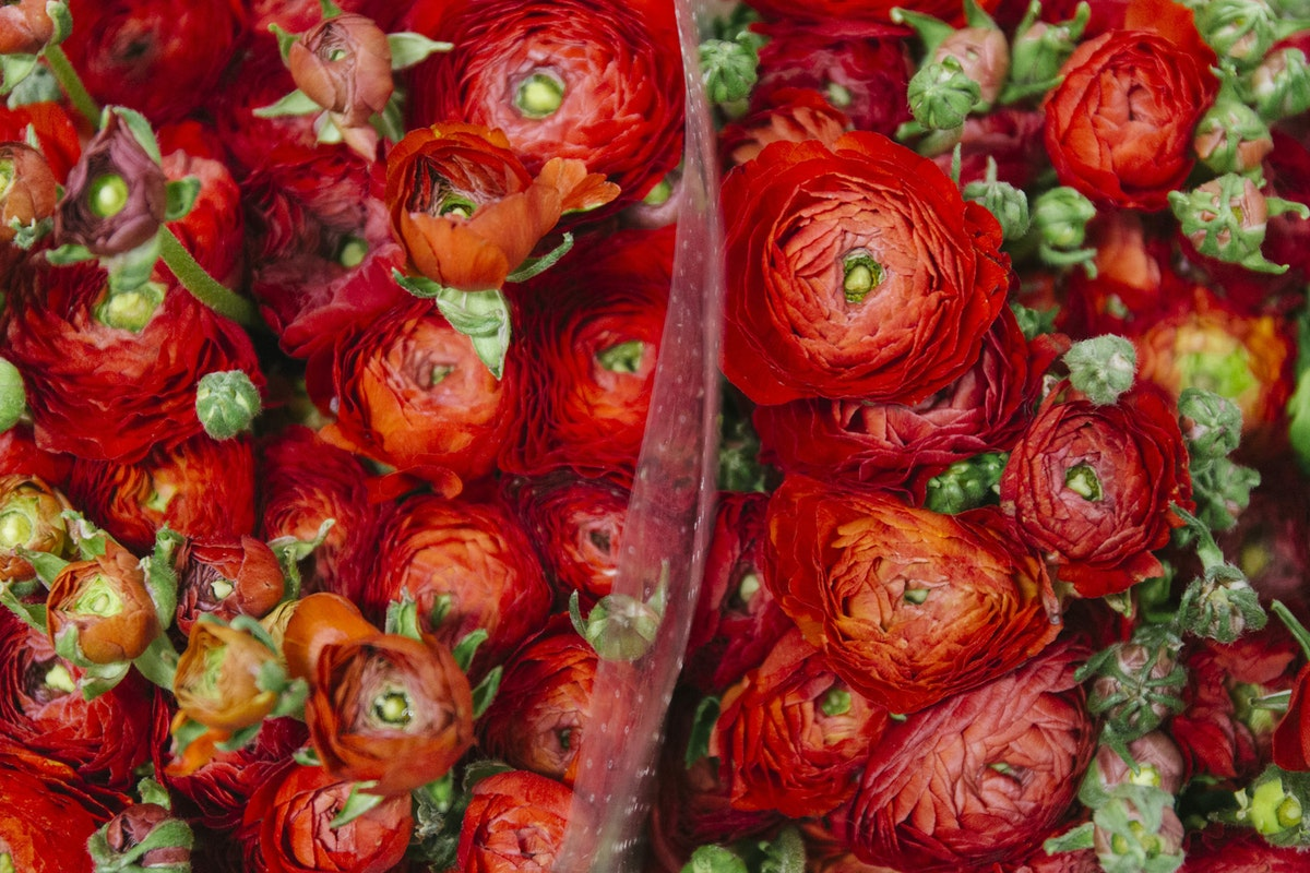 New Covent Garden Flower Market A Florists Guide To Christmas At The Flower Market Rona Wheeldon Flowerona November 2018 Ranunculus Elegance Red At Dennis Edwards Flowers