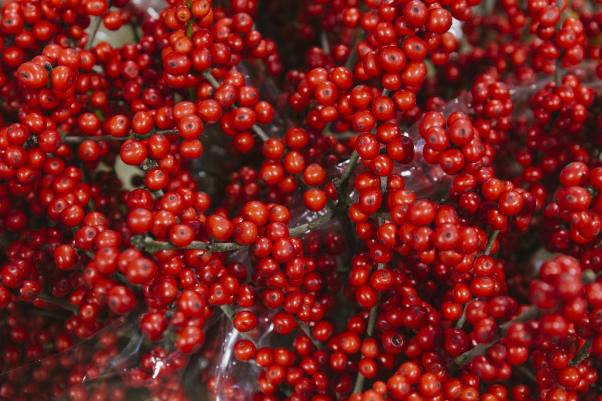 New Covent Garden Flower Market A Florists Guide To Christmas At The Flower Market Rona Wheeldon Flowerona November 2018 Red Ilex Verticillata At Bloomfield