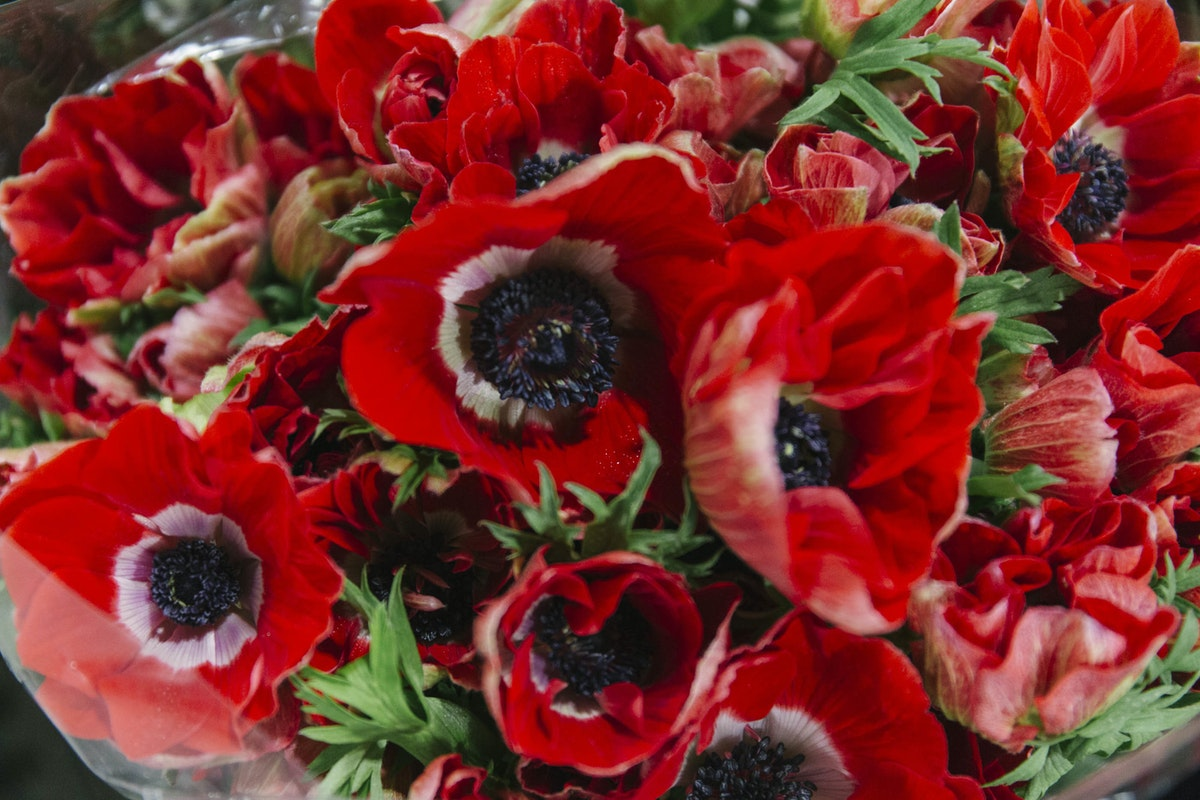 New Covent Garden Flower Market A Florists Guide To Christmas At The Flower Market Rona Wheeldon Flowerona November 2018 Red Anemones At Dg Wholesale Flowers