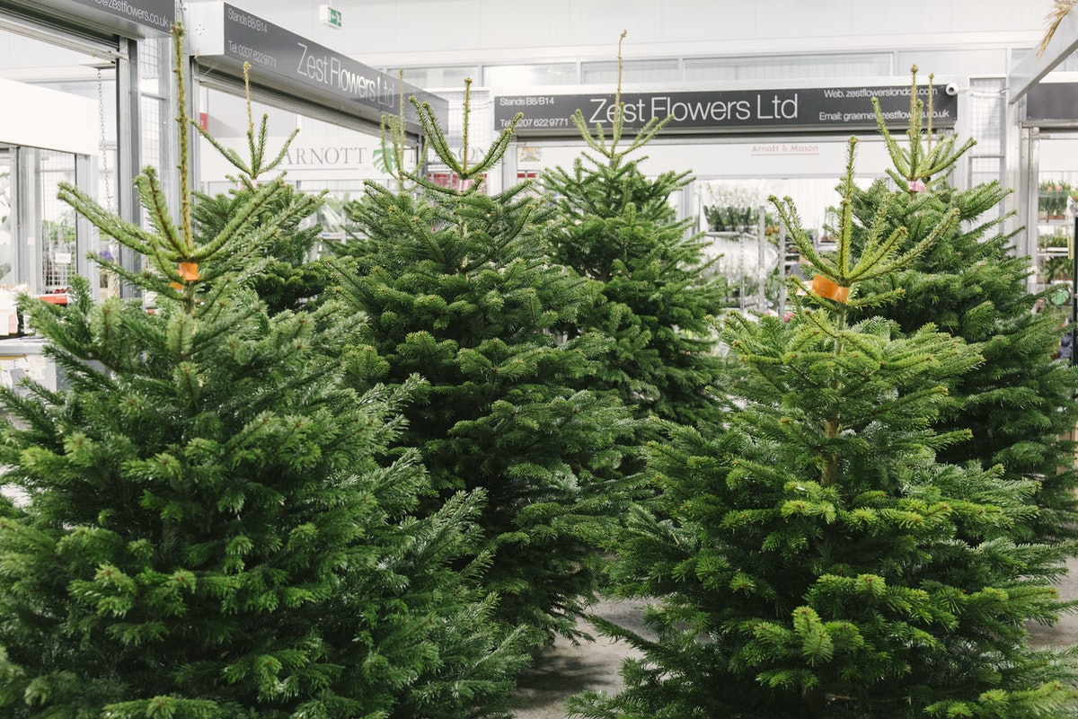 New Covent Garden Flower Market A Florists Guide To Christmas At The Flower Market Rona Wheeldon Flowerona November 2019 Christmas Trees At Zest Flowers