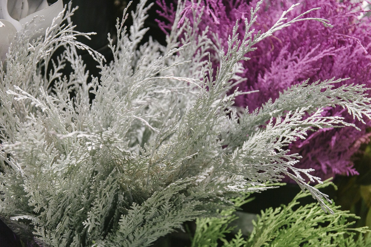 New Covent Garden Flower Market A Florists Guide To Christmas At The Flower Market Rona Wheeldon Flowerona November 2019 Painted Cupressus At Porters Foliage